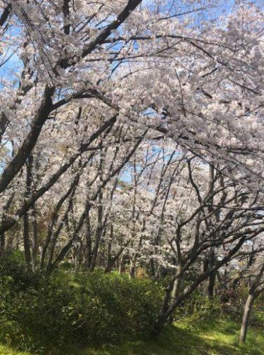 春になったら芽が出るように、 それが光に向かって伸びていくように、 魂は成長したがっているのです 作家 梨木香歩 名言